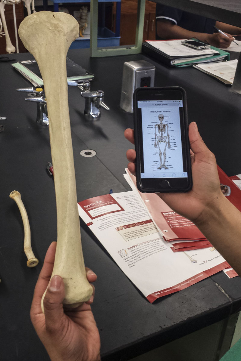 The Pedagogical Value of Mobile Devices and Software in the Anatomy ...